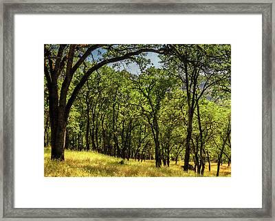 Upper Park In Spring Framed Print