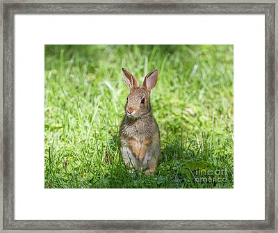 Framed Print featuring the photograph Upright Rabbit by Chris Scroggins