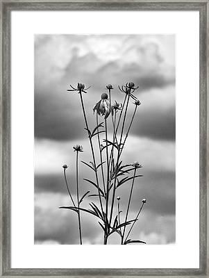 Uprising Framed Print by Robert Ullmann