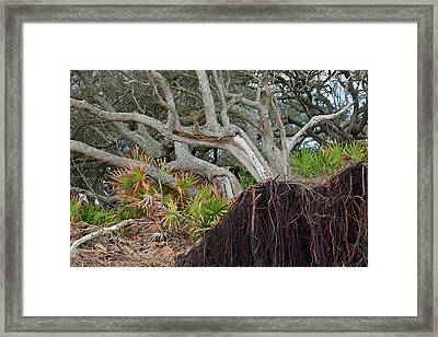 Uprooted Framed Print by Bruce Gourley