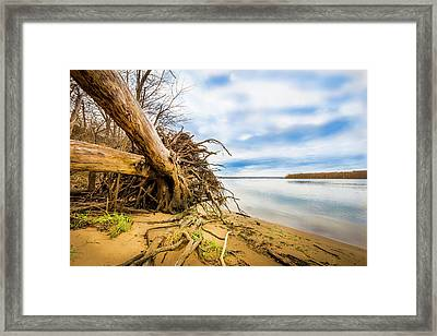 Uprooted On The Mississippi Framed Print