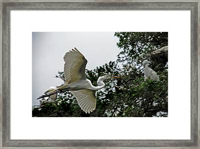 Ups Delivery Framed Print by Skip Willits