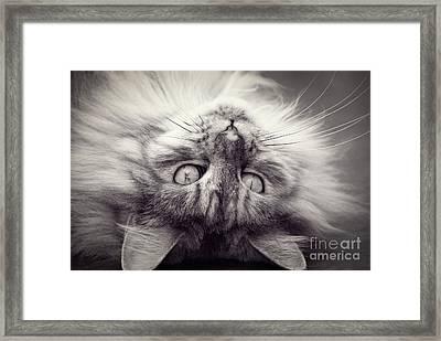 Upside Down Cat Framed Print by Elaine Hillson