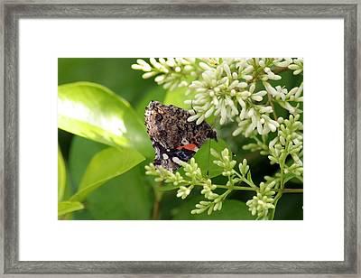 Upside Down Nectar Collector Framed Print by ShadowWalker RavenEyes Dibler