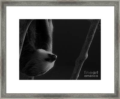 Upside Down Sloth Framed Print