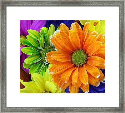 Upstaged By Orange Framed Print