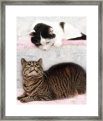 Upstairs Downstairs With Emmy And Pepper Framed Print by Andee Design