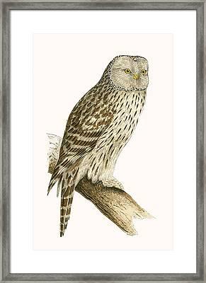 Ural Owl Framed Print by English School