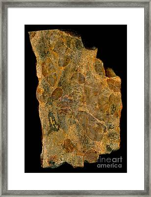 Uranium Ore Conglomerate Framed Print by Ted Kinsman