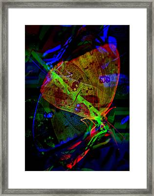 Urban Butterfly Framed Print by Skip Willits