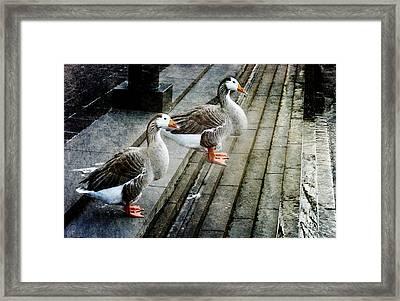 Urban Geese Framed Print