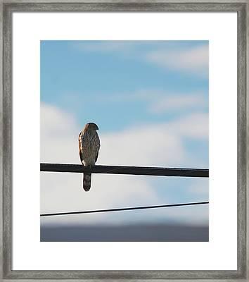 Urban Hunter Framed Print by David S Reynolds
