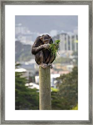 Urban Jungle Framed Print by Andrea Cadwallader