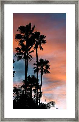 Urban Palms Framed Print by Peter Breaux