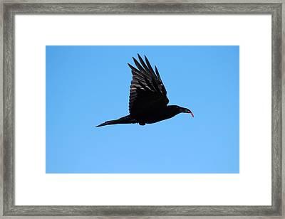 Urban Raven Framed Print