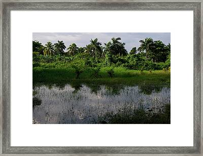 Urban Swamp Framed Print