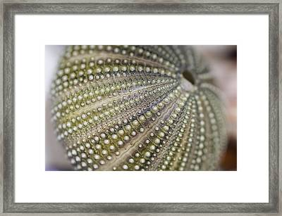 Urchin Texture Framed Print by Laura George