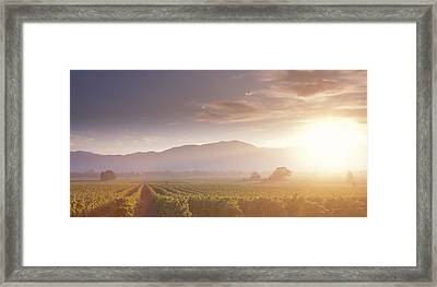 Usa, California, Napa Valley, Vineyard Framed Print by Panoramic Images