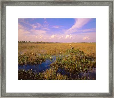 Usa, Florida, Everglades National Park Framed Print by Panoramic Images