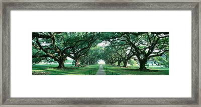 Usa, Louisiana, New Orleans, Brick Path Framed Print by Panoramic Images