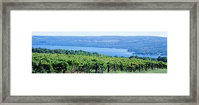 Usa, New York, Finger Lakes, Vineyard Framed Print by Panoramic Images