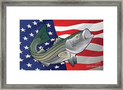 Usa Rockfish Striped Bass Framed Print by Joe Barsin