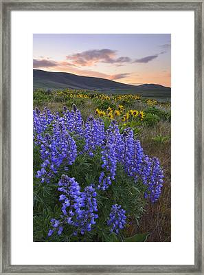 Usa, Washington, Dalles Mountain State Park, Landscape With Lupine Flower In Foreground Framed Print