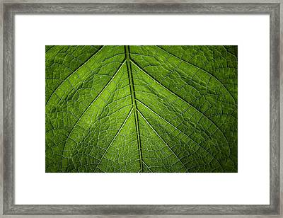 Framed Print featuring the photograph Usbg Leaf One by Kevin Blackburn