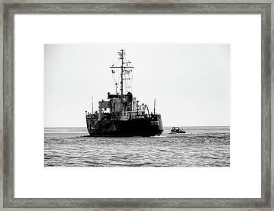 White Portugeuse Framed Print