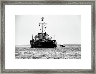 White Portugeuse Framed Print by Randy J Heath