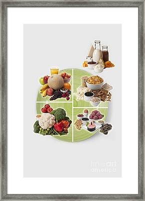 Usda Myplate Framed Print by George Mattei