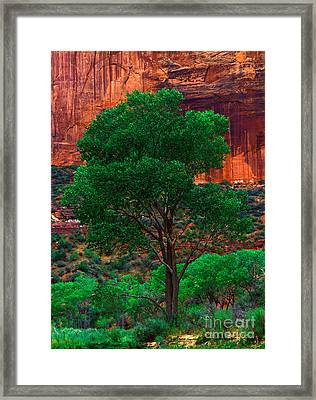 Utah - Cottonwood Framed Print by Terry Elniski