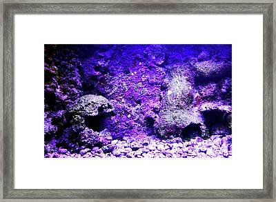 Framed Print featuring the photograph Uw Coral Stone 2 by Francesca Mackenney