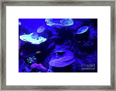 Framed Print featuring the photograph Uw Neon Coral by Francesca Mackenney
