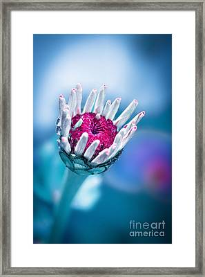 Vailla Framed Print by INA FineArt