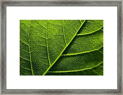 Vain Leaf Framed Print by Sarita Rampersad