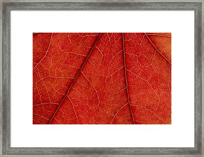 Framed Print featuring the photograph Vains by Chevy Fleet