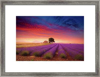 Valensole Plateau Framed Print by Giovanni Allievi