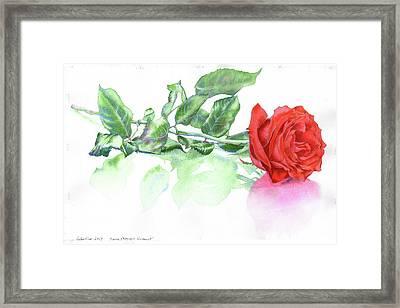 Valentine Rose Framed Print