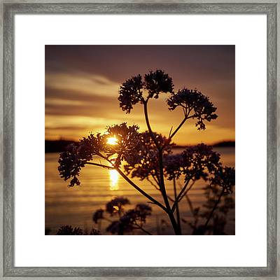 Valerian Sunset Framed Print by Jouko Lehto