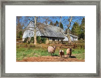 Valley Forge Sheep Farm Framed Print by Lori Deiter