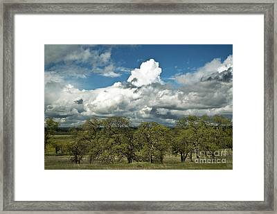 Valley Oaks Framed Print