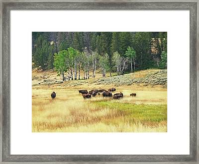 Valley Of The Buffaloes Framed Print