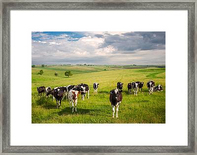 Valley Of The Cows Framed Print