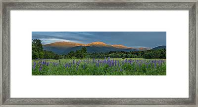 Valley Way Lupine Sunset Framed Print