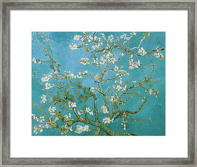 Van Gogh Blossoming Almond Tree Framed Print by Vincent Van Gogh