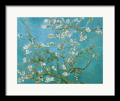 Almond Framed Prints