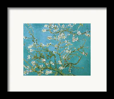 Blossoms Framed Prints