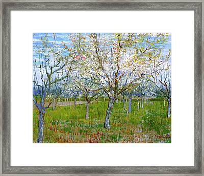Van Gogh The Pink Orchard Framed Print by Vincent Van Gogh