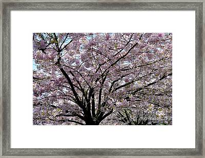 Framed Print featuring the photograph Vancouver 2017 Spring Time Cherry Blossoms - 10 by Terry Elniski